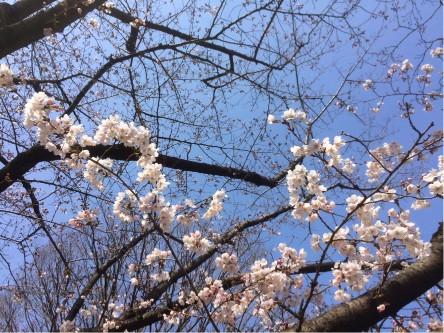 170325a_suzuki_02
